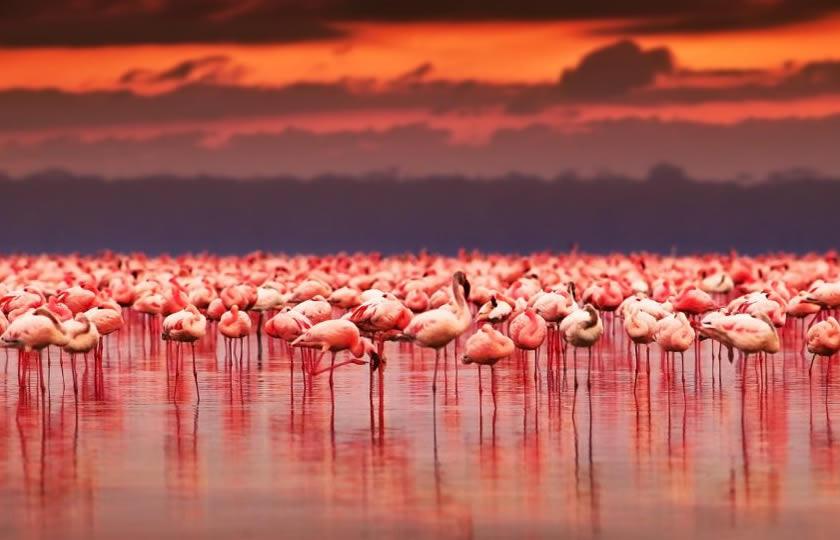 Birding in Lake Nakuru