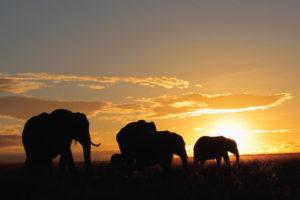 East Africa Safari