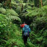 Kahuzi Biega Nature Walk