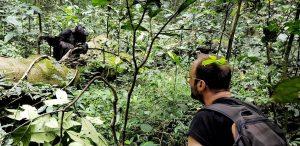 kibale Chimp Tracking
